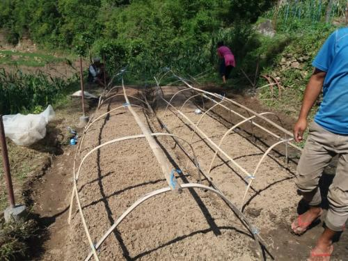 Establishing-tunnel-for-coffee-farming