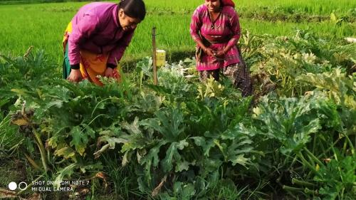 Open-farming-of-vegetables