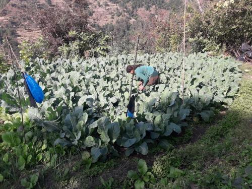 Women-busy-taking-care-of-the-vegetables