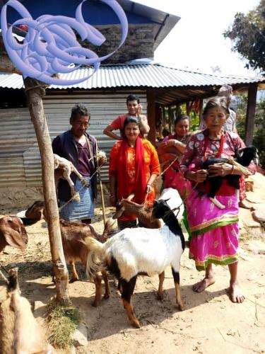 goat-distribution-to-elderly-man-and-women