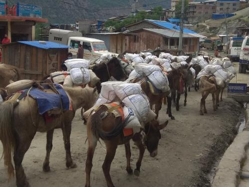 Transporting Nutritious food from Mugu to Humla